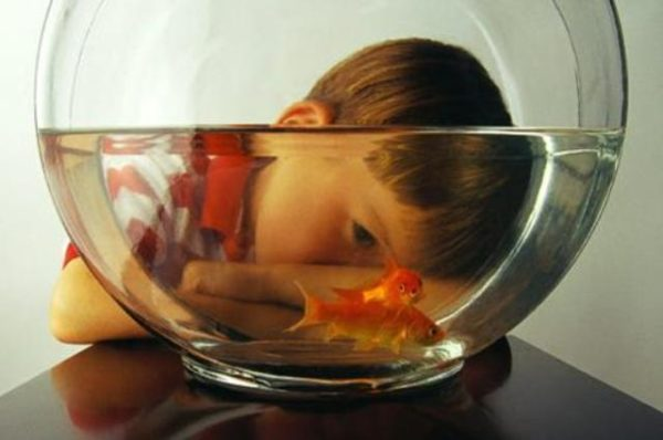 goldfish kid 600x398