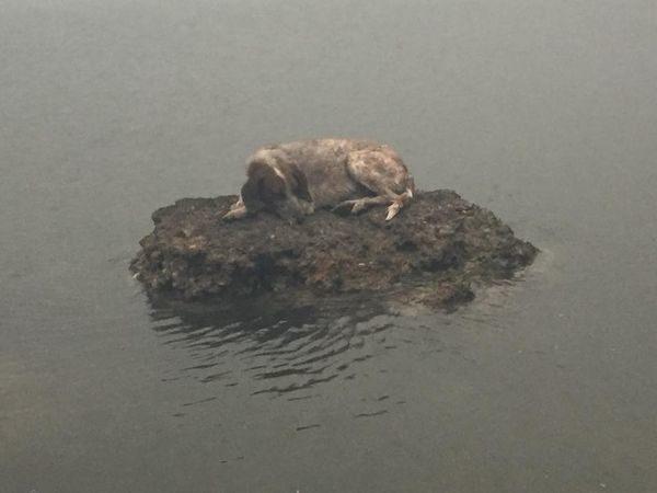 Εθνική τραγωδία στην Ανατολική Αττική: Οι αγκαλιασμένοι νεκροί και η απόλυτη φρίκη! φωτιά τραγικό συμβάν πυρκαγιά